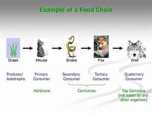 Mice Food Chain - Food Ideas