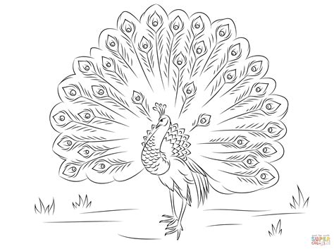 Beautiful Peacock Coloring Page