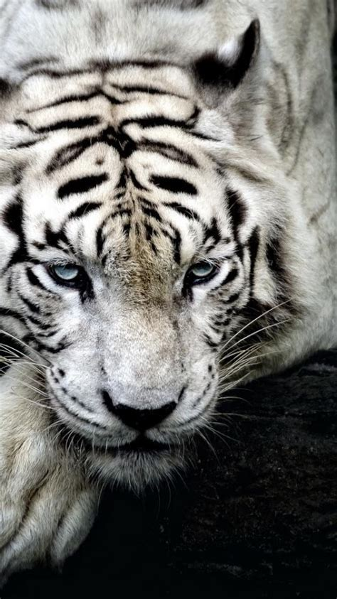 Android Animal Wallpaper - animal wallpapers hd android apps on play