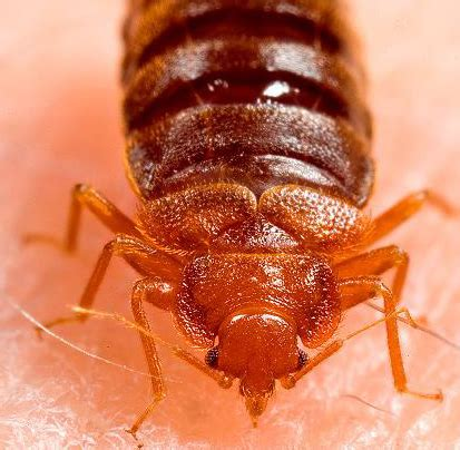 pest control exterminators   york city brooklyn