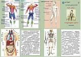 Народные средства от простаты у мужчин симптомы лечение