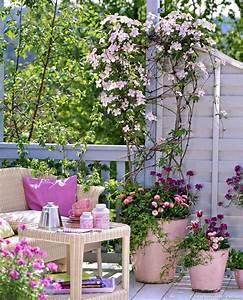 Plantes Grimpantes Pot Pour Terrasse : les 25 meilleures id es de la cat gorie plante grimpante ~ Premium-room.com Idées de Décoration