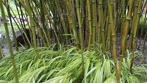 Balkonpflanzen Winterfest Machen : bambus winterfest machen ~ Watch28wear.com Haus und Dekorationen