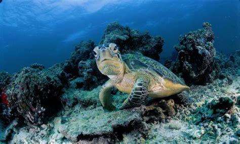 Dive Sipadan by Sipadan Dive Resorts Mabul And Kapalai Malaysia Dive