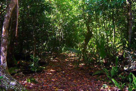 Hammock Trails by Matheson Hammock Trail Florida Hikes
