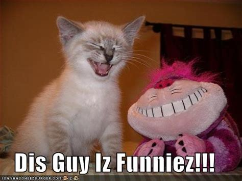 funny pictures  animals  captions tedlillyfanclub