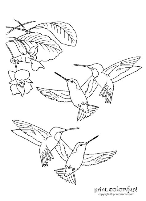 Hummingbirds | Print. Color. Fun! Free printables, coloring pages, crafts, puzzles & cards to