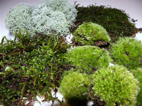 type of moss live moss facts questions