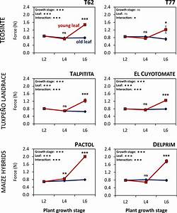 Leaf Toughness In Maize And Teosinte Increases In A Leaf