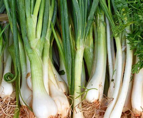 วิธีปลูกหอมแบ่ง (Multiplying Onion) | Plookphak.com