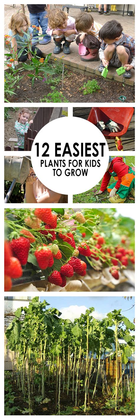 easiest roses to grow 12 easiest plants for kids to grow page 4 of 13 bees and roses