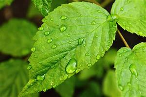 Drops of water on leaf by ChristopherPluta on DeviantArt