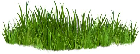 black and white best grass clipart 10835 clipartion com