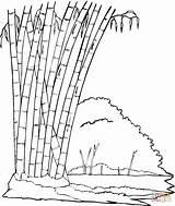 Bamboo Coloring Jungle Trees Printable Panda Forest Tree Drawing Eating Leaves Sitting Natural Coloringpages101 Coloringbay Sheets Getdrawings Supercoloring Mitraland Colourings sketch template