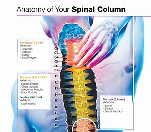 About The Spine