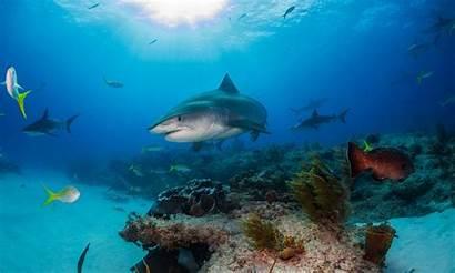Wildlife Contest Marine Seascape Ocean Conservancy