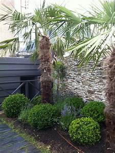 Palmier De Jardin : jardin buis palmier et lavandes decoration jardin ~ Nature-et-papiers.com Idées de Décoration