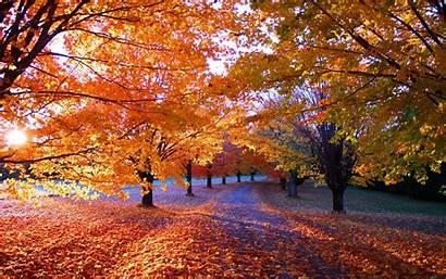 Fall Trees Sunrise Leaves Nature Morning Path