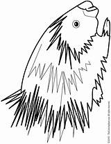 Porcupine Coloring Pages Colouring Drawing Line Clipart Cliparts Getdrawings Brain Library sketch template