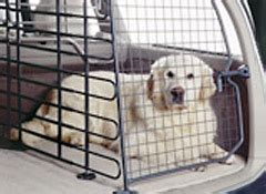 pets  car safety driving  pets consumer reports