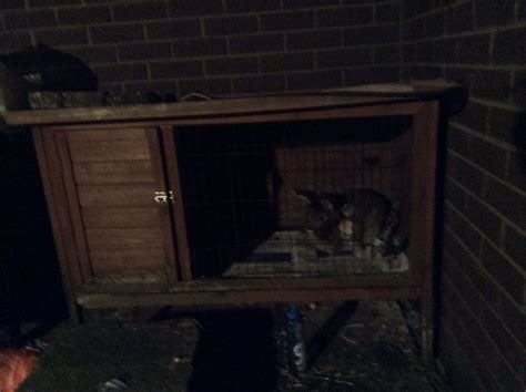 large rabbit hutches for sale large rabbit hutch for sale chipping norton oxfordshire