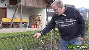 Wie Entferne Ich Klebereste : wie schneide ich einen jungen apfelbaum youtube ~ Eleganceandgraceweddings.com Haus und Dekorationen