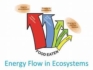 04 Energy Flow In Ecosystems