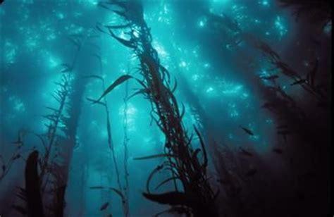 portal  professor floresta de kelp riquezas escondidas