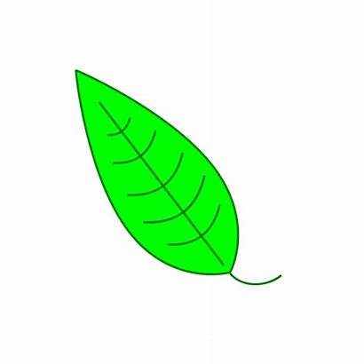 Leaf Clipart Icon Cliparts Tutorial Illustration Simple
