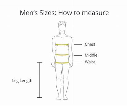 Sizes Measure Chart Clothes Guide Sizing Chest