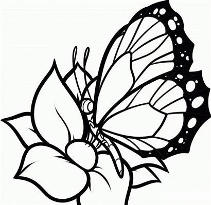 Coloring Pages Butterflies Flowers Butterfly Printable Colour