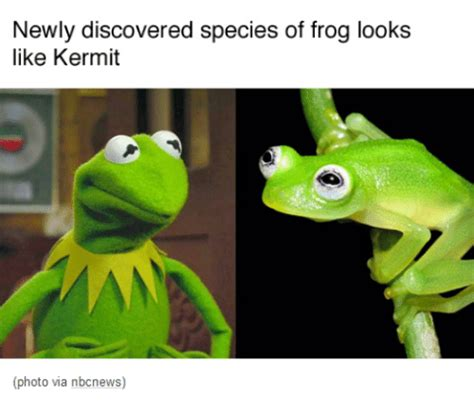 Sitting Frog Meme - newly discovered species of frog looks like kermit photo via nbcnews funny meme on sizzle