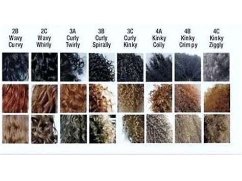 Hair Types by Your Hair Type And Porosity Level
