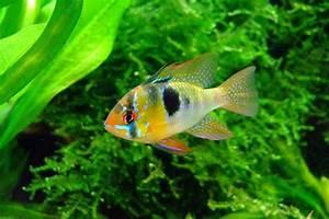 Poisson Aquarium Eau Chaude : tipos de peces ~ Mglfilm.com Idées de Décoration