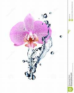 Orchidee Klebrige Tropfen : orchidee und wasser stockfoto bild 39797712 ~ Lizthompson.info Haus und Dekorationen