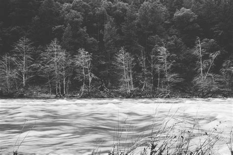 Free Stock Photo Of Black And White Forest Ice