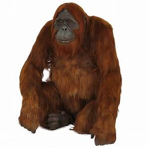 R-015 Orangutan with real hair PROTHEME GLOBAL