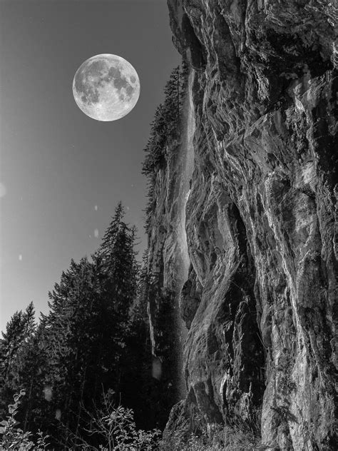 images tree nature forest rock black  white