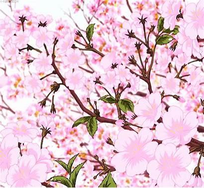 Cherry Blossom Inazuma Eleven Fanpop