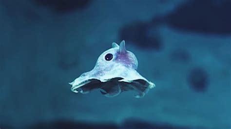 Diese Unterwassertiere habt ihr noch nie gesehen