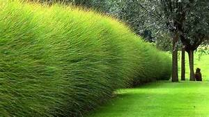 Haie Naturelle Brise Vue : quels types d 39 arbustes choisir pour votre haie moving ~ Premium-room.com Idées de Décoration