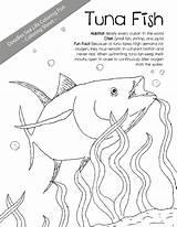 Tuna Coloring Mackerel Designlooter Fish Template Drawings sketch template