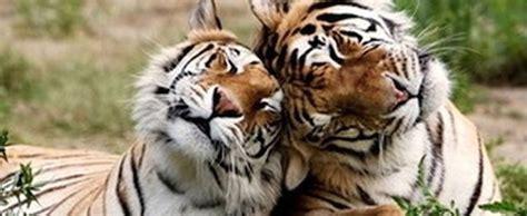 bloodthirsty wild animal  blog native wild animals