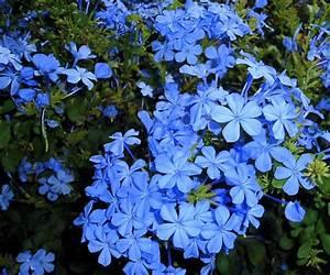 Pflanzen Für Schattigen Balkon : 21 balkonpflanzen die zu ihrem eingenen balkon passen ~ Watch28wear.com Haus und Dekorationen