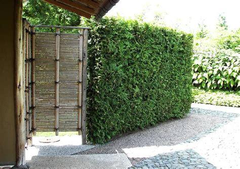 Die Hecke Natuerlicher Zaun Und Sichtschutz by Berlin Marzahn Japanischer Garten Sichtschutz Und