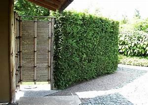 Berlin Japanischer Garten : berlin marzahn japanischer garten sichtschutz und ~ Articles-book.com Haus und Dekorationen