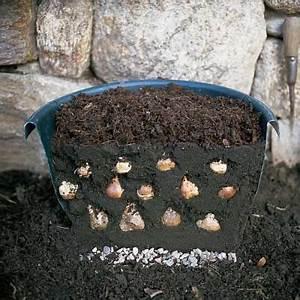 Blumenzwiebeln Pflanzen Frühjahr : die besten 25 blumenzwiebeln pflanzen ideen auf pinterest gl hbirnen gartenzwiebeln und ~ A.2002-acura-tl-radio.info Haus und Dekorationen