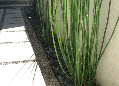 plants for a modern garden modern garden plants landscaping network