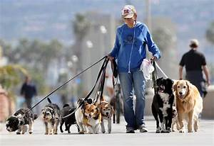 How to spot the best dog walkers in chicago small tips for Be a dog sitter