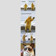 Top 25 Funny Animals Photos And Memes  Quotes And Humor